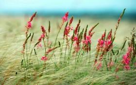 Обои поле, небо, трава, цветы, степь