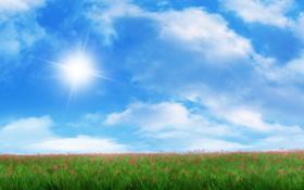 Обои трава, солнце, красные, арт, поле, цветы