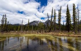 Обои Канада, Альберта, Alberta, Canada, Sulphur Mountain