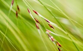 Обои трава, растение, зелень, обои, картинка, природа, фон