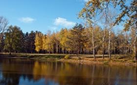 Обои лес, осень, легкие облака, озеро, голубое небо