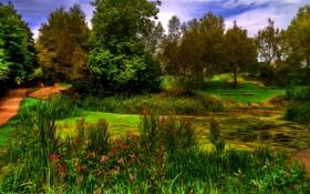 Картинка деревья, пруд, парк, Англия, обработка, Oldham