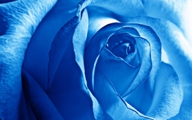Обои Роза, Бутон, Лепестки, Голубая Роза