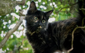 Картинка глаза, взгляд, дерево, кошак, котяра