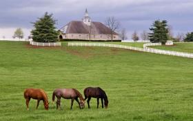 Обои пейзаж, дом, забор, лошади, луг, усадьба