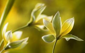 Картинка макро, цветы, природа, желтые