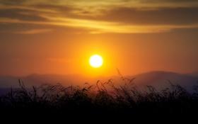 Картинка солнце, облака, закат, горы, стебли, горизонт