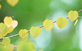 Картинка листья, фон, сердце, ветка, желтые, форма, боке