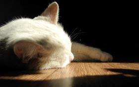 Обои свет, макро, кошка