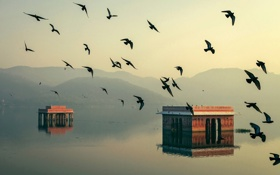 Картинка вода, свет, птицы, дома, утро, Индия, Джайпур