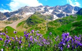 Картинка небо, облака, цветы, горы, альпы