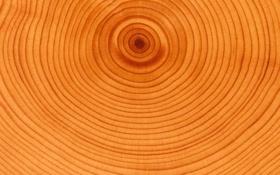 Обои yellow, Orange, natural, wood