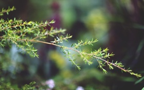 Обои листья, макро, веточка, ветка