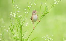 Обои травинки, гипсофила, птичка, клюв, соломинки, камышевка, ветка