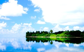 Обои небо, пальмы, океан, берег