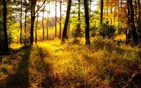 Обои осень, лес, трава, природа, яркость