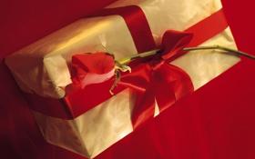 Обои цветок, красный, настроение, праздник, коробка, подарок, роза