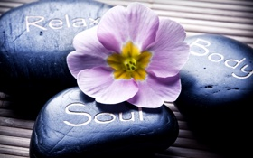 Обои надпись, спа, the flower, Spa stones, the label, спа камни, цветок