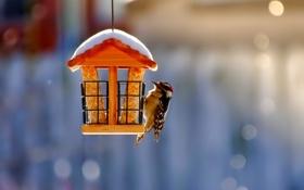 Обои снег, природа, птица, скворечник