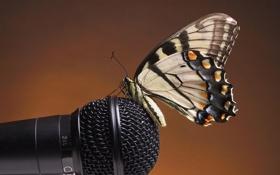 Обои бабочка, микрофон, сидит