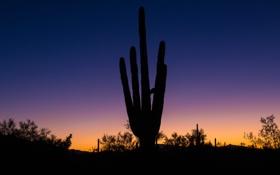 Обои пустыня, кактус, горизонт, силуэт, Аризона, зарево, США