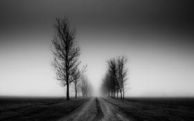 Картинка пейзаж, поле, деревья, дорога