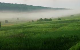 Обои трава, деревья, природа, туман, обои, пейзажи, дым