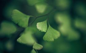 Обои зелень, листва, Природа, красота, девтсвенная