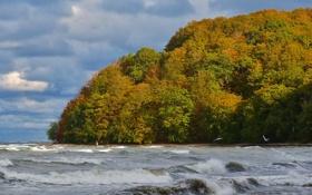 Обои волны, осень, лес, небо, облака, деревья, птица