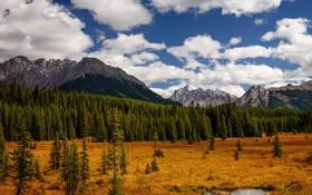 Обои осень, лес, облака, горы, Alberta, Canada, Peter Lougheed Provincial Park