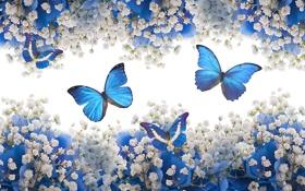 Картинка бабочки, цветы, white, blue, blossom, flowers, butterflies