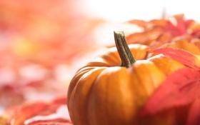 Обои осень, листва, тыква