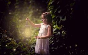Обои фонарь, лес, светлячки, природа, девочка