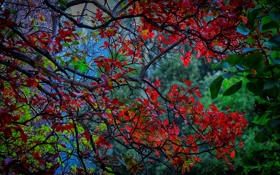 Картинка осень, листья, деревья, ветка, багрянец