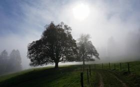 Картинка свет, пейзаж, туман, утро