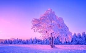 Обои зима, лес, небо, снег, деревья, закат