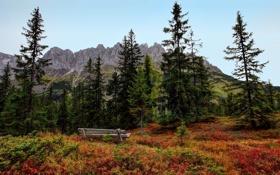 Обои лес, осень, лавочка, деревья, скамейка