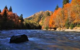 Картинка лес, осень, река, поток, листья, деревья, горы