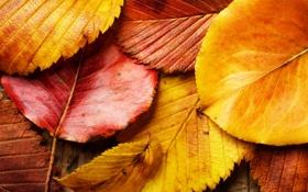 Обои осень, листья, макро, красный, жёлтый, листва, листок