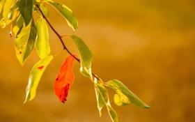 Обои осень, листья, ветка