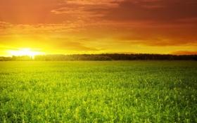 Обои поле, небо, солнце, облака, закат, зелёное, красивый