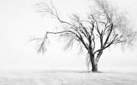 Обои листья, деревья, природа, фото, дерево