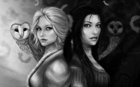 Обои взгляд, девушки, брюнетка, арт, блондинка, черно-белое, совы