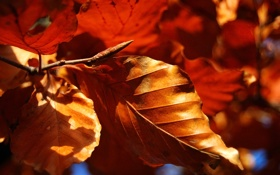 Картинка осень, листья, макро, природа, осенние обои