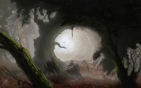 Картинка лес, камни, грибы, арт