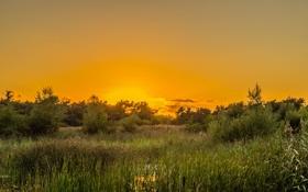 Обои небо желтый, восход солнца, горизонт, озеро, куст