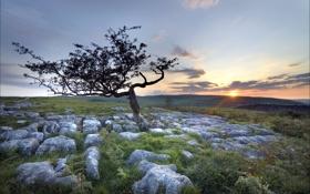 Картинка закат, камни, поле, пейзаж, дерево