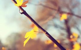 Обои листик, осень, веточка, макро