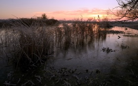 Обои закат, природа, река, камыш