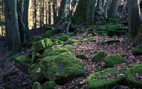 Картинка лес, камни, мох